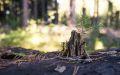 ferienland-schwarzwald-freizeit-tourismus-04