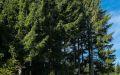 ferienland-schwarzwald-freizeit-tourismus-16